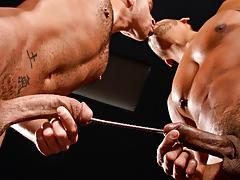Black Gay Tube
